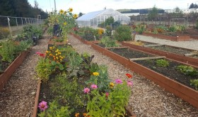 SouthSoundTalk – DuPont Community Garden: Growing a Community